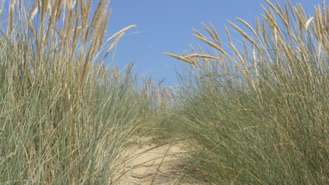 Sand dunes, Marram grass, deep blue sky and sea. Copy space. Lockdown.