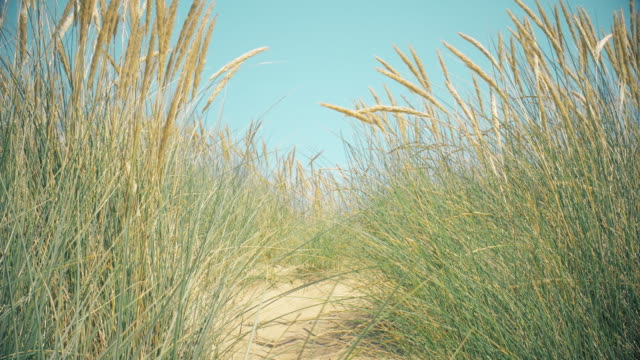 Sand dunes, Marram grass, pale blue sky and sea. Copy space. Lockdown.