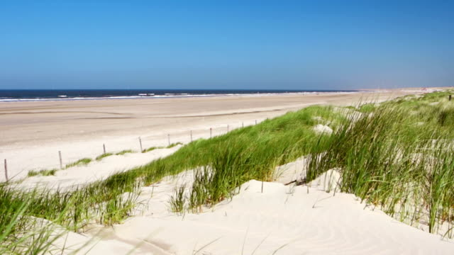 Sand dunes with grass and beach on a clear day video