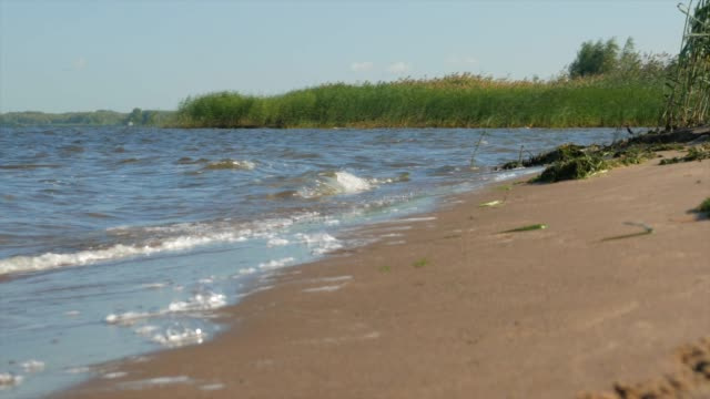 Sandy beach with reeds and bushes on a warm sunny day