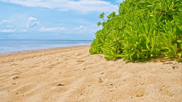 WS DS Sanur Beach video