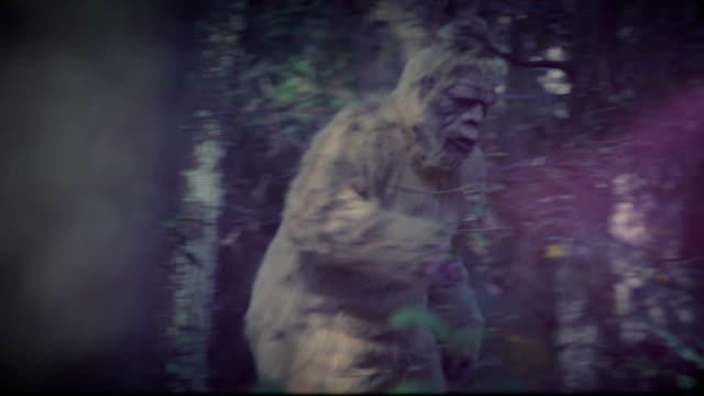 sasquatch - yeti video stock e b–roll