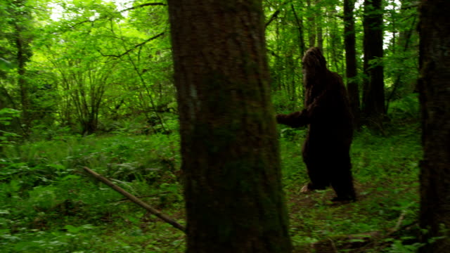 sasquatch (piede cammina attraverso boschi) - bigfoot video stock e b–roll