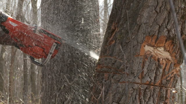 Sawing Tree video