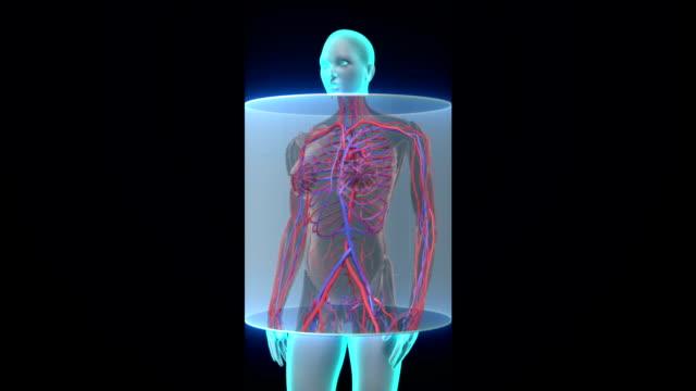 Scanning blood vessle in female body. video