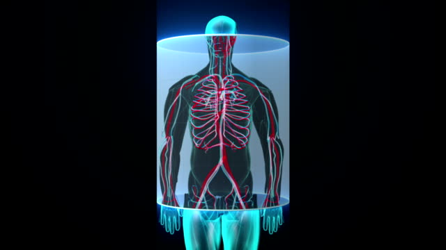 Scanning blood vessle in male body. Scanning blood vessle in male body digital display dashboard. X-ray view physiology stock videos & royalty-free footage