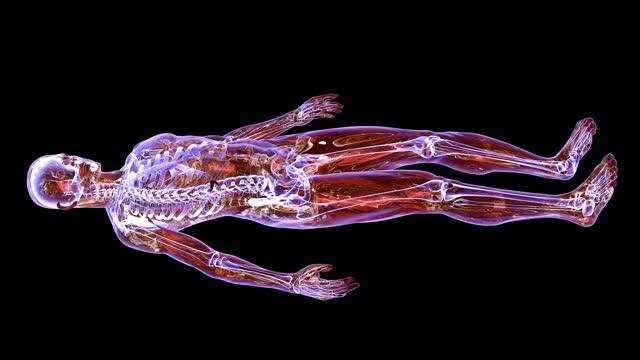 mr-skanning av människokroppen - lem kroppsdel bildbanksvideor och videomaterial från bakom kulisserna