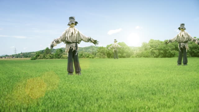 Scarecrows in the field video