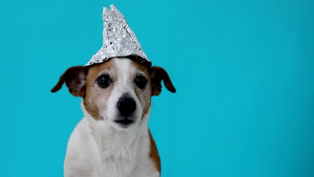 scared dog in a foil hat - aluminum foil stock videos & royalty-free footage
