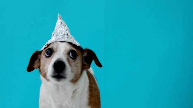 scared dog in a foil hat - cappello video stock e b–roll