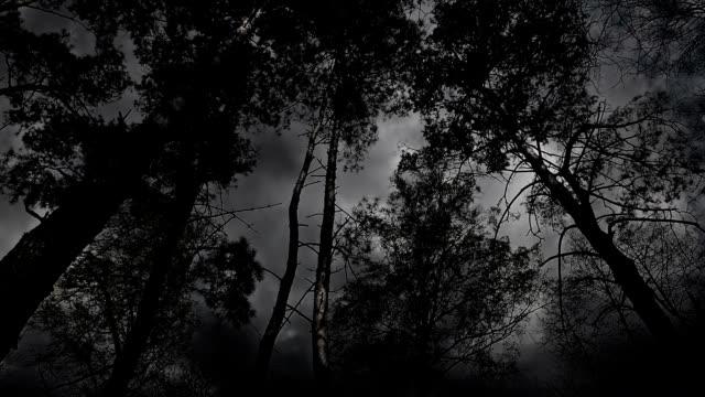 spaventoso bianco e nero alberi durante la tempesta. - fronda video stock e b–roll