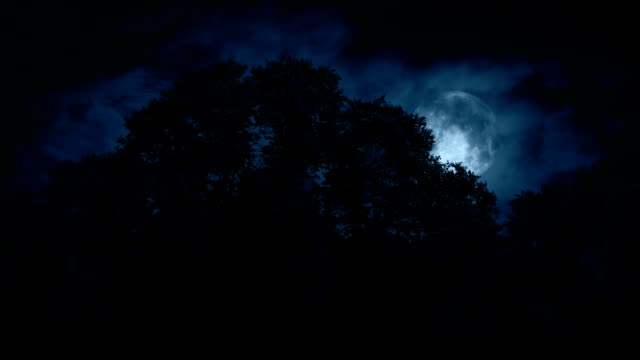Scary Full Moon Over The Woods