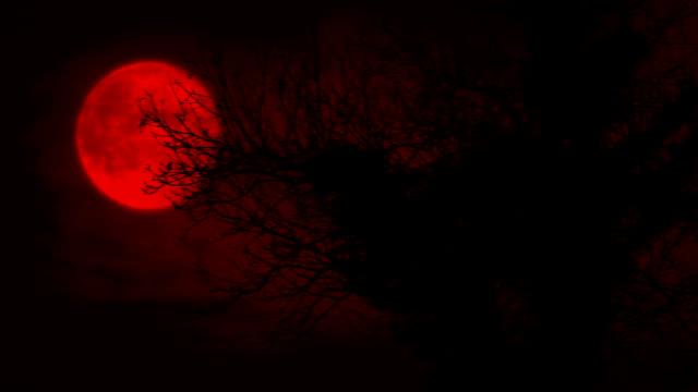 Scary Red Moon And Old Overgrown Tree Red moon in the sky behind a twisted old tree count dracula stock videos & royalty-free footage