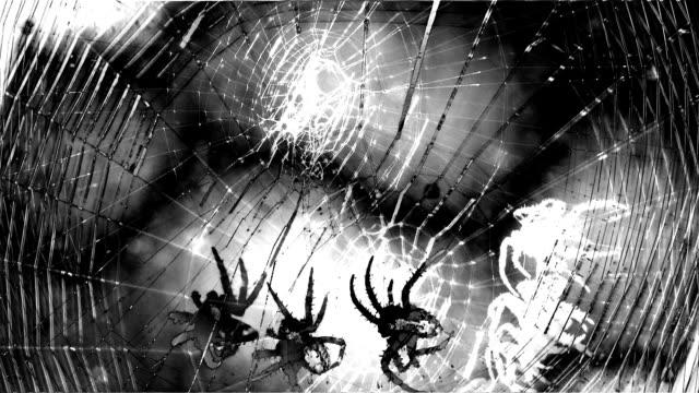 scary spider montage black and white horror creepy - spindel arachnid bildbanksvideor och videomaterial från bakom kulisserna