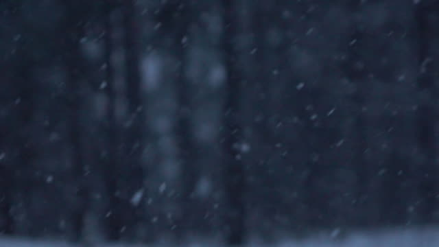SLOW MOTION: Scary spruce forest on dark winter night during heavy snow blizzard video