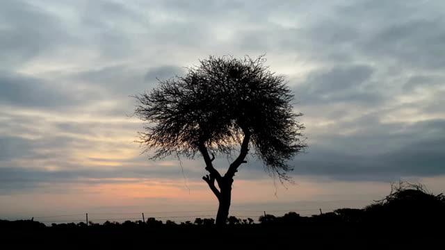 scary tree silhouette con couds movimiento - vídeo