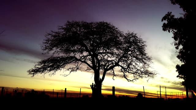 scary tree silhouette con atardecer timelapse - vídeo