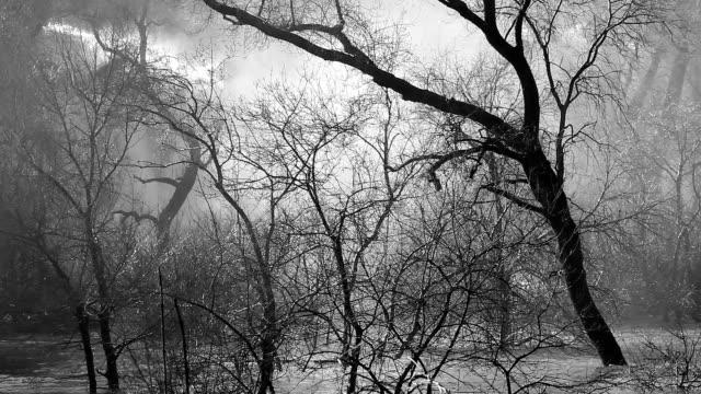 恐ろしいの木 - ボスニア・ヘルツェゴビナ点の映像素材/bロール
