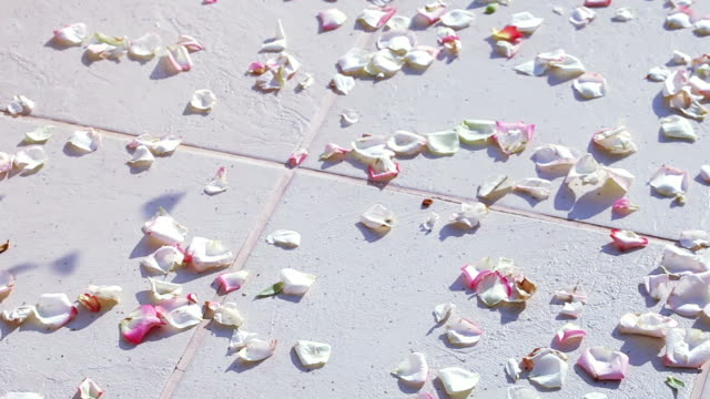 Scattering rose petals video