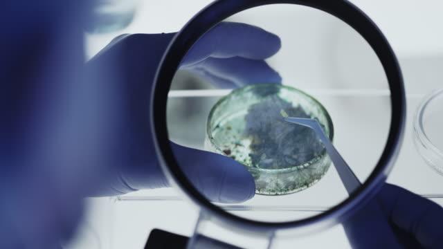 sceintist tittar på lab prover i petri maträtt på nära håll. vetenskapslaboratoriet. - medicinskt stickprov bildbanksvideor och videomaterial från bakom kulisserna