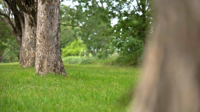 scene dolly shot of grass and tree in the park, concept of green background - dolly shot video stock e b–roll