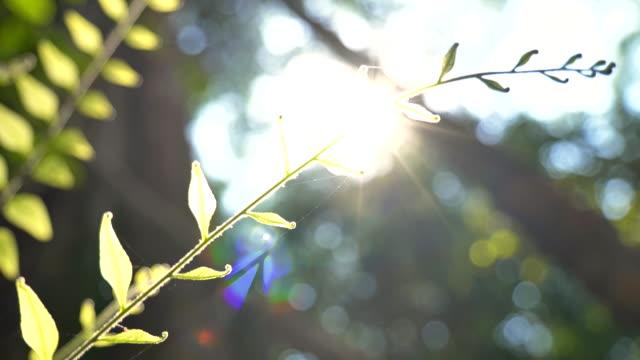 scen ljus överleva träd i skogen, concept natur bakgrund - eucalyptus leaves bildbanksvideor och videomaterial från bakom kulisserna