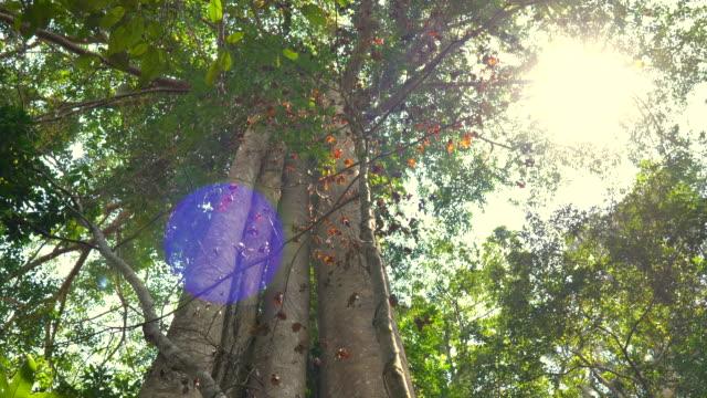 sahne ışık asya 'da yağmur ormanları ağaçlar hayatta, konsept doğa background - kubbe stok videoları ve detay görüntü çekimi