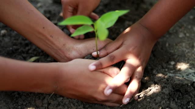 男の子のシーン新しい木を植え、概念は地球を保存し、世界を救う、地球を救う、エコロジーのコンセプト - 苗点の映像素材/bロール