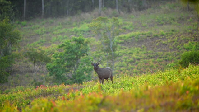 Scene of deer eating grass at morning in the nature, Animal in the wild
