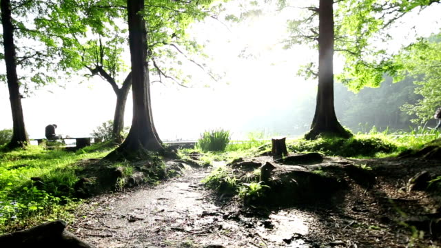 Scena z drzewa rano, w czasie rzeczywistym.   Ujęcie podążające. – film