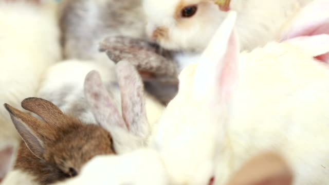 Scene slow motion cute of rabbits on animal farm