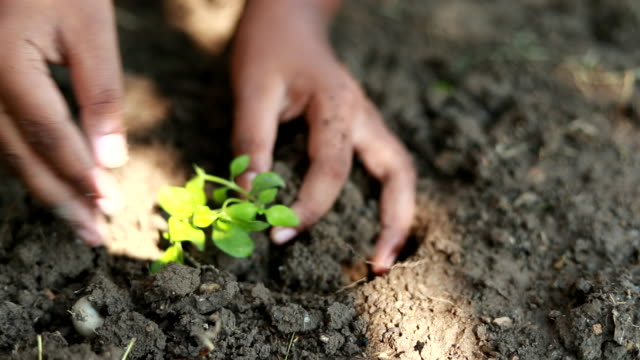 Scene slow motion of boys planting a new tree, concept save the earth, save the world, save planet, ecology concept Video scene slow motion of boys planting a new tree, concept save the earth, save the world, save planet, ecology concept (HD) horticulture stock videos & royalty-free footage