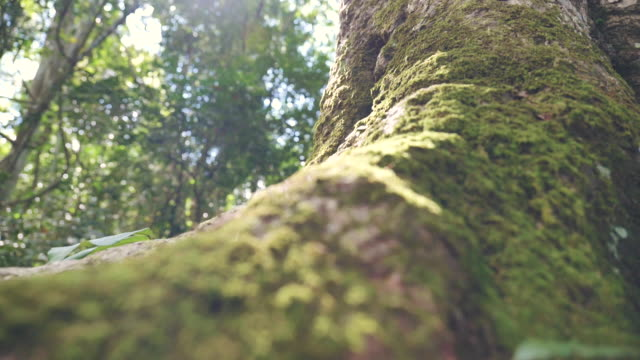 Scene slow motion of trees, roots and moss in the sunny woods