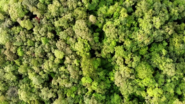 Scenery green leafy forest be abundant in natural park