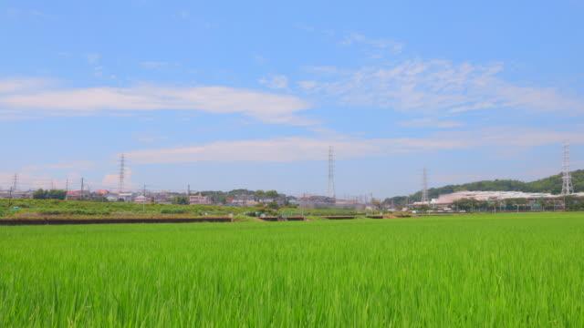 横浜郊外の風景 - 水田点の映像素材/bロール