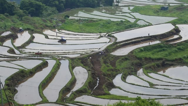 Scenery of rice terraces video