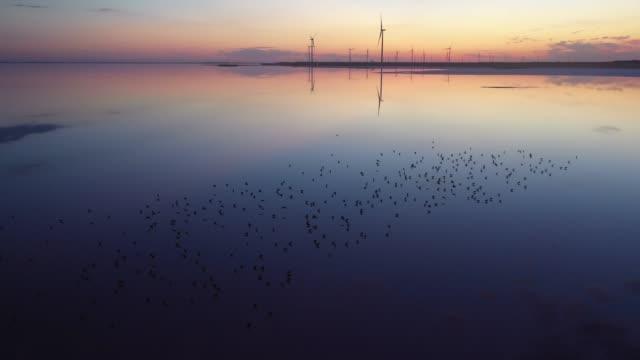 Scenic aerial view of seagulls on pink salt lake near  wind turbine station