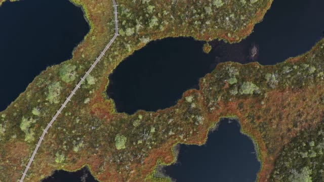 Scenic aerial  view of swamp in Estonia