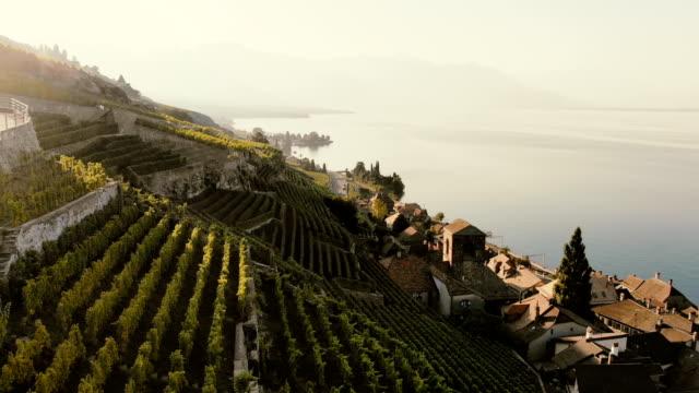 vídeos de stock e filmes b-roll de scenic aerial view of vineyards near geneva lake - suíça