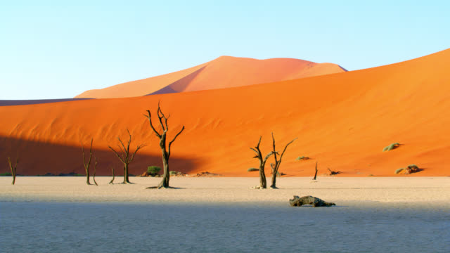WS Scenic Deadvlei trees in white clay and sand dune,Namibia,Africa Scenic Deadvlei trees in white clay and sand dune,Namibia,Africa. Real Time. Shot in 8K resolution. namibia stock videos & royalty-free footage