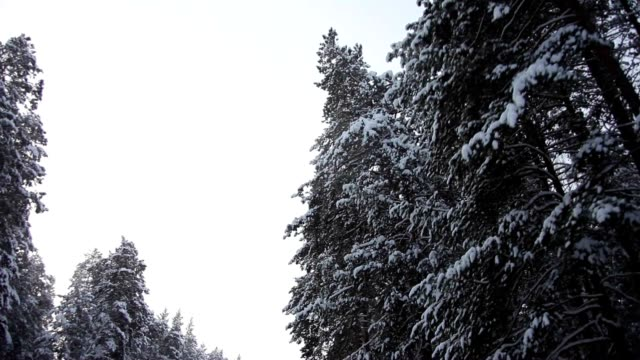 Scenic Forest Road Between Snow-Covered Pine Trees video