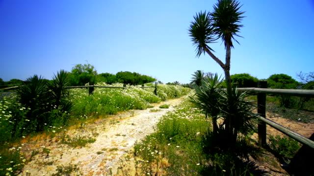 terreno strada panoramica, incorniciata da daisies - cespuglio tropicale video stock e b–roll