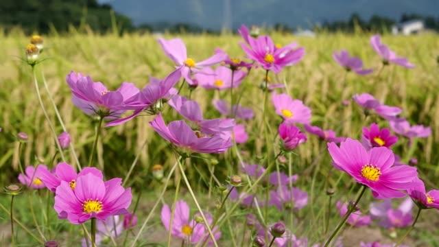 Scenic Japanese Flowers Scenic Japanese Flowers jp201806 stock videos & royalty-free footage