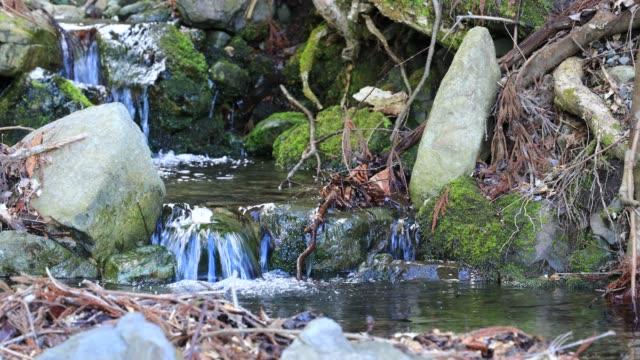 日本の風光明媚な森とモトレインの流れ - 清らか点の映像素材/bロール