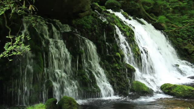 風光明媚な日本の森林 - 清潔点の映像素材/bロール