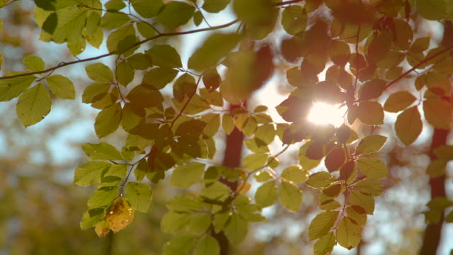 close up: scenic shot of autumn sunbeams gleaming through the tree branches. - lasek filmów i materiałów b-roll