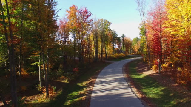 Scenic Tour of Road with Colorful Autumn Trees. video