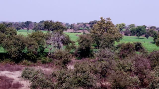 scenic view from running passenger train - madhya pradesh filmów i materiałów b-roll