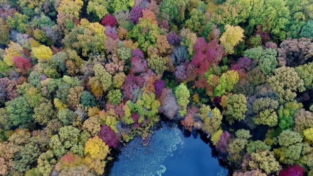 Scenic view of Autumn foliage in New Jersey Flying at tree top level looking straight down. Vibrant Autumn colors. 4K, 4096x2160 resolution shot from a DJI Phantom4 Pro drone. saturated color stock videos & royalty-free footage