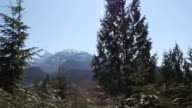 istock Scenic view of conifers and snowy mountains 1214546440